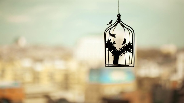birds-in-cages-wallpaper1366x76863218